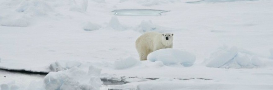 polar-bear-climate