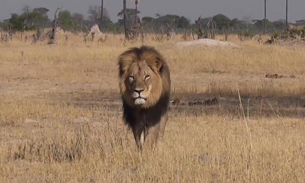 cecil-lion