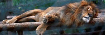 venezuela-zoo